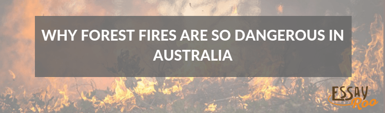 Why forest fires are so dangerous in Australia essay