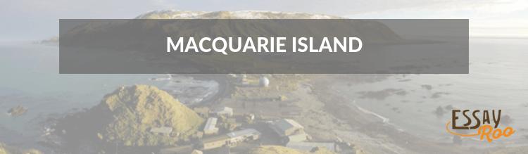 Macquarie Island essay