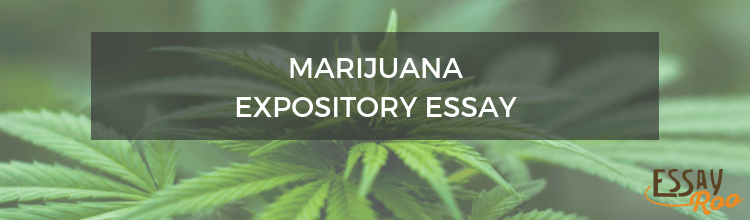 Writing an Expository Essay About Marijuana